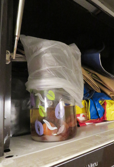 Vildjäst som står och gottar sig ovanför kylskåpet